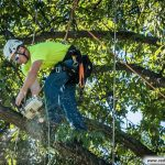 A Guide to Tree Surgeon Insurance