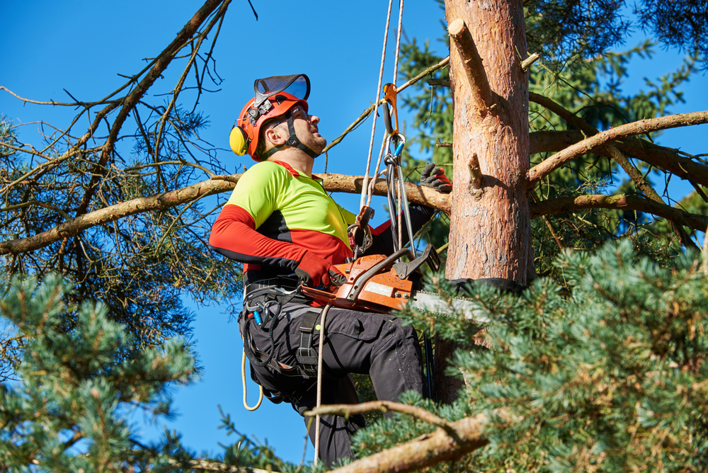 A Guide to Tree Surgeons Insurance